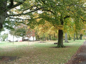 Autumn Colour Cooper Park 21.10.14 1